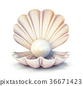 pearl shell 36671423