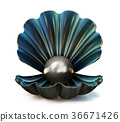 pearl shell 36671426