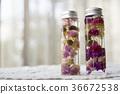 식물 표본 herbarium 천일홍 36672538