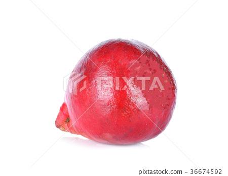 Radish Cherry Belle on white background 36674592
