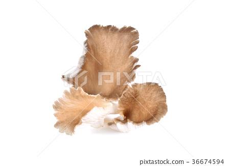 Mushroom angel on white background 36674594