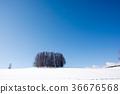 winter, blue, sky 36676568