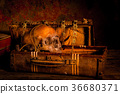 Still life with human skull with treasure chest  36680371