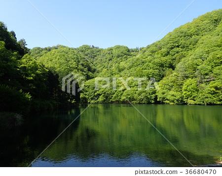 호수 36680470