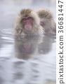 온천에 잠기 원숭이 36681447