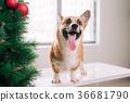 聖誕節 聖誕 耶誕 36681790