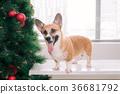 聖誕節 聖誕 耶誕 36681792