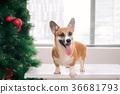 聖誕節 聖誕 耶誕 36681793