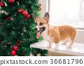 聖誕節 聖誕 耶誕 36681796