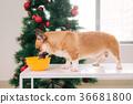 聖誕節 聖誕 耶誕 36681800
