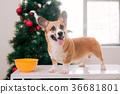 聖誕節 聖誕 耶誕 36681801
