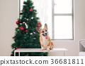 聖誕節 聖誕 耶誕 36681811