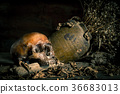 Human skull and flower vase old on wooden  36683013