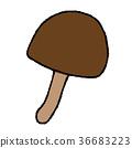 shiitake mushroom, shitake 36683223