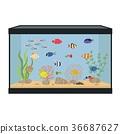 Rectangular aquarium with colorful fish 36687627