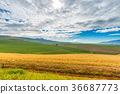 Cultivated fields and farms with scenic sky 36687773