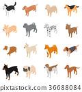 Dog icons set, isometric 3d style 36688084