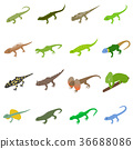lizard, isometric, 3d 36688086