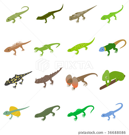 Lizard icons set, isometric 3d style 36688086