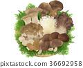 蘑菇拼盤(Hiba) 36692958