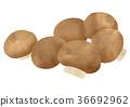 버섯 (브라운) 36692962
