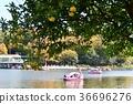 가을 동산 식물원 36696276