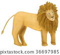 สัตว์,ภาพวาดมือ,สิงโต 36697985