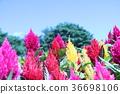 สวนดอกไม้ฤดูร้อน 36698106