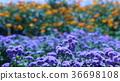 สวนดอกไม้ฤดูร้อน 36698108