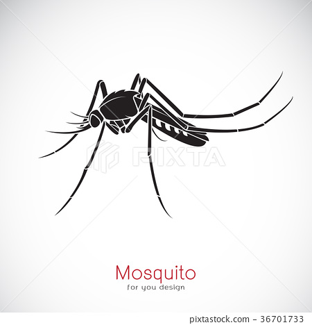 Vector of a Mosquito design on white background. 36701733