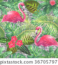 tropical, pattern, flower 36705797