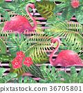 tropical, pattern, flower 36705801