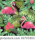 tropical, pattern, flower 36705803