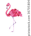 flamingo, pink, flower 36705804