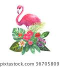 flower hibiscus blossom 36705809