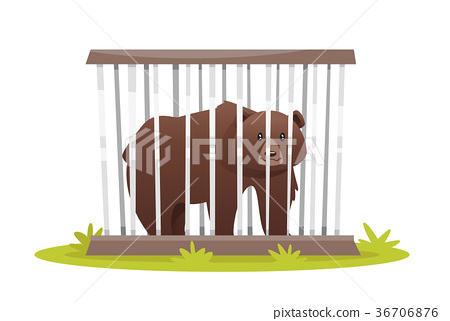 sad bear in zoo cage 36706876