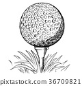 Vector Hand Drawing of Golf Ball on Tee 36709821