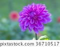植物 植物學 植物的 36710517