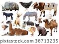 動物 農場 摳圖 36713235