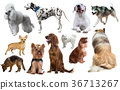 dog breed set 36713267