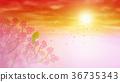 벚꽃, 동박새, 석양 36735343