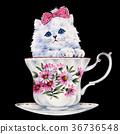 动物 猫 猫咪 36736548