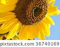 화초, 꽃, 플라워 36740169