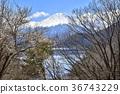 ฤดูหนาว,ภูเขาฟูจิ,ภูเขาไฟฟูจิ 36743229