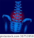 脊柱 解剖學 骨頭 36753958