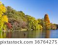 가을 이노 카 시라 공원 36764275