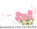 鬱金香 花朵 花 36764764
