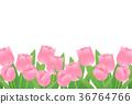 鬱金香 花朵 花 36764766