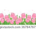 鬱金香 花朵 花 36764767