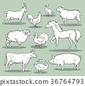 Farm animals sketch 36764793